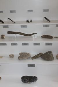 fosili 3